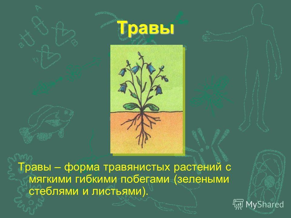 Травы Травы – форма травянистых растений с мягкими гибкими побегами (зелеными стеблями и листьями).