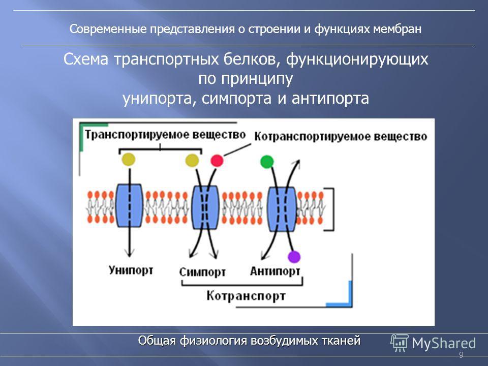 9 Современные представления о строении и функциях мембран Общая физиология возбудимых тканей Схема транспортных белков, функционирующих по принципу унипорта, симпорта и антипорта