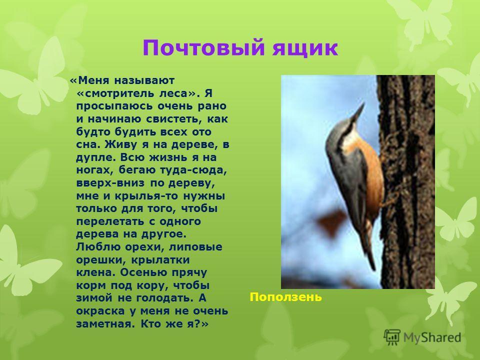 Почтовый ящик «Меня называют «смотритель леса». Я просыпаюсь очень рано и начинаю свистеть, как будто будить всех ото сна. Живу я на дереве, в дупле. Всю жизнь я на ногах, бегаю туда-сюда, вверх-вниз по дереву, мне и крылья-то нужны только для того,