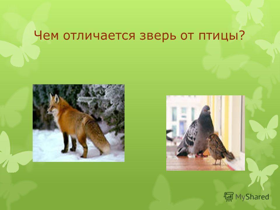 Чем отличается зверь от птицы?