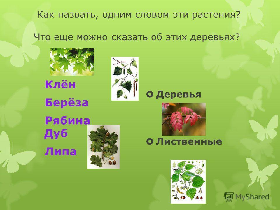 Как назвать, одним словом эти растения? Что еще можно сказать об этих деревьях? Клён Берёза Рябина Дуб Липа Деревья Лиственные
