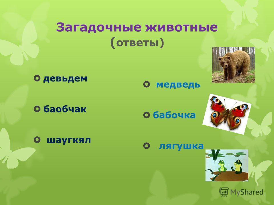 Загадочные животные ( ответы) девьдем баобчак шаугкял медведь бабочка лягушка