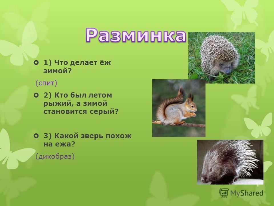 1) Что делает ёж зимой? (спит) 2) Кто был летом рыжий, а зимой становится серый? 3) Какой зверь похож на ежа? (дикобраз)