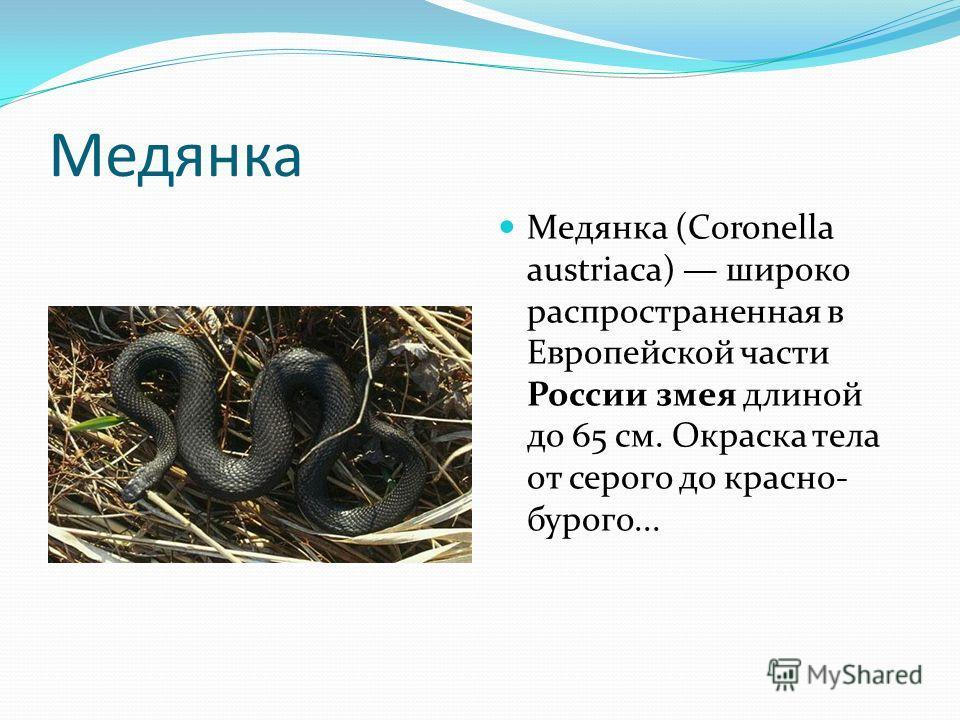 Медянка Медянка (Coronella austriaca) широко распространенная в Европейской части России змея длиной до 65 см. Окраска тела от серого до красно- бурого...