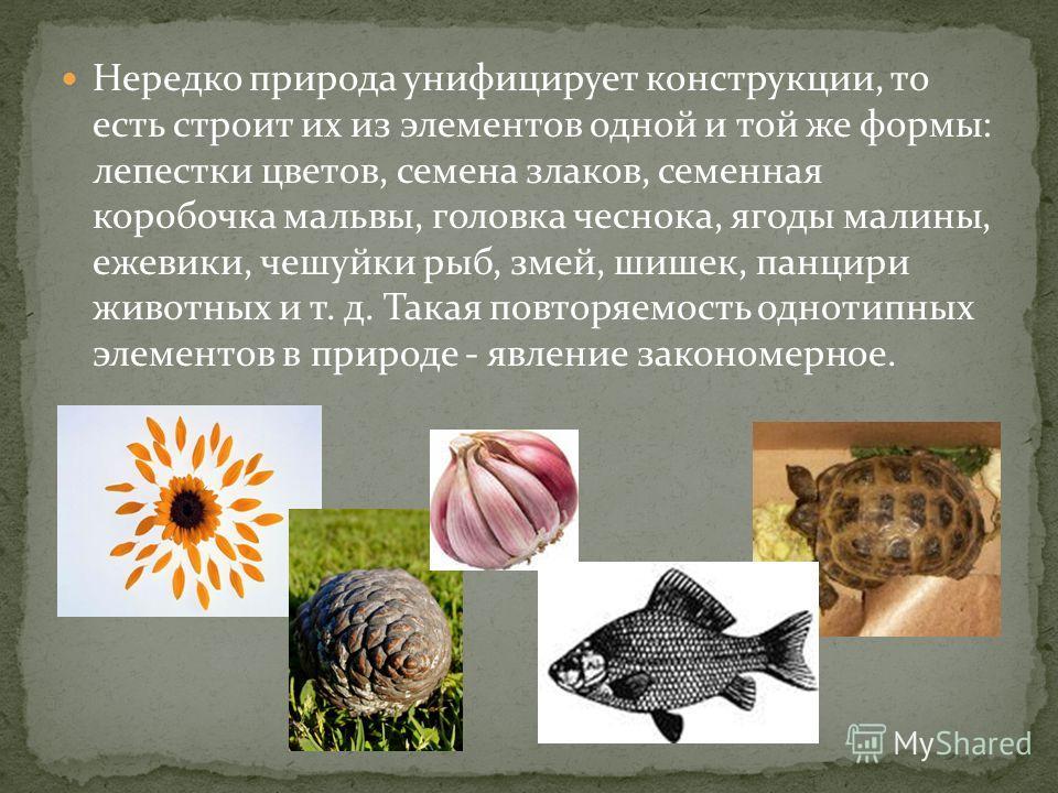 Нередко природа унифицирует конструкции, то есть строит их из элементов одной и той же формы: лепестки цветов, семена злаков, семенная коробочка мальвы, головка чеснока, ягоды малины, ежевики, чешуйки рыб, змей, шишек, панцири животных и т. д. Такая