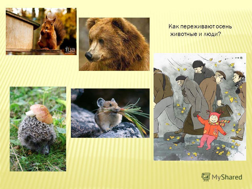 Как переживают осень животные и люди?