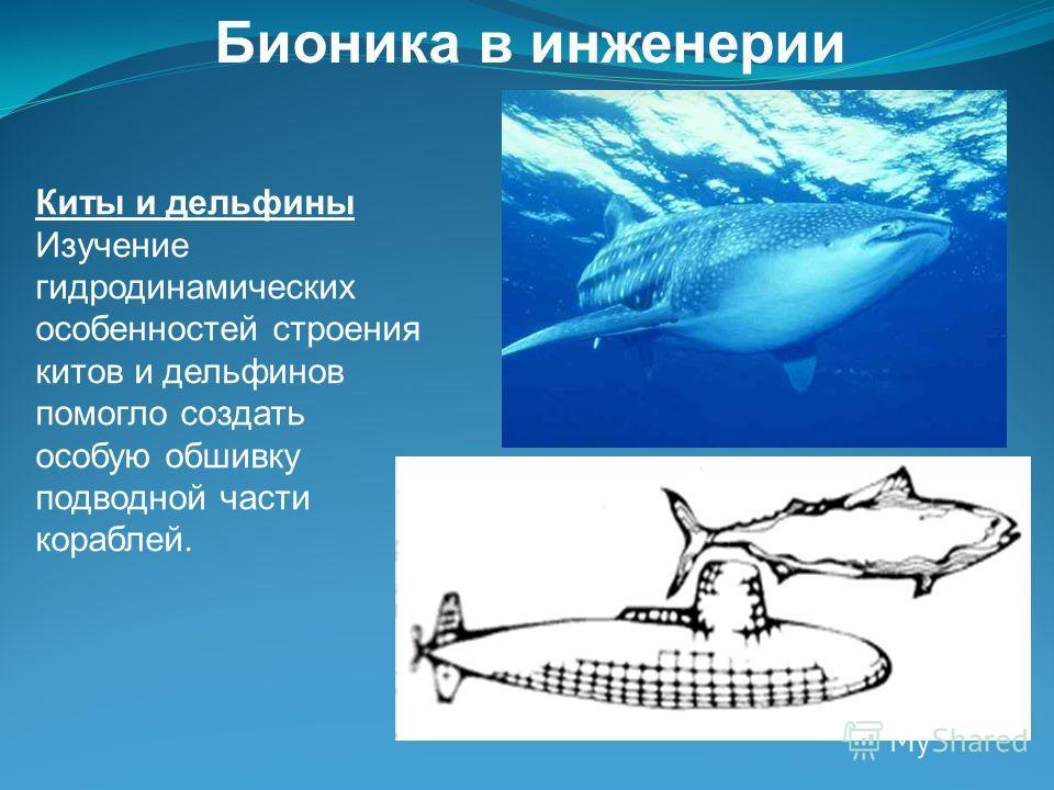 Киты и дельфины Изучение гидродинамических особенностей строения китов и дельфинов помогло создать особую обшивку подводной части кораблей. Бионика в инженерии