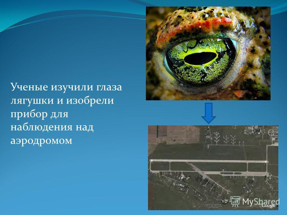 Ученые изучили глаза лягушки и изобрели прибор для наблюдения над аэродромом