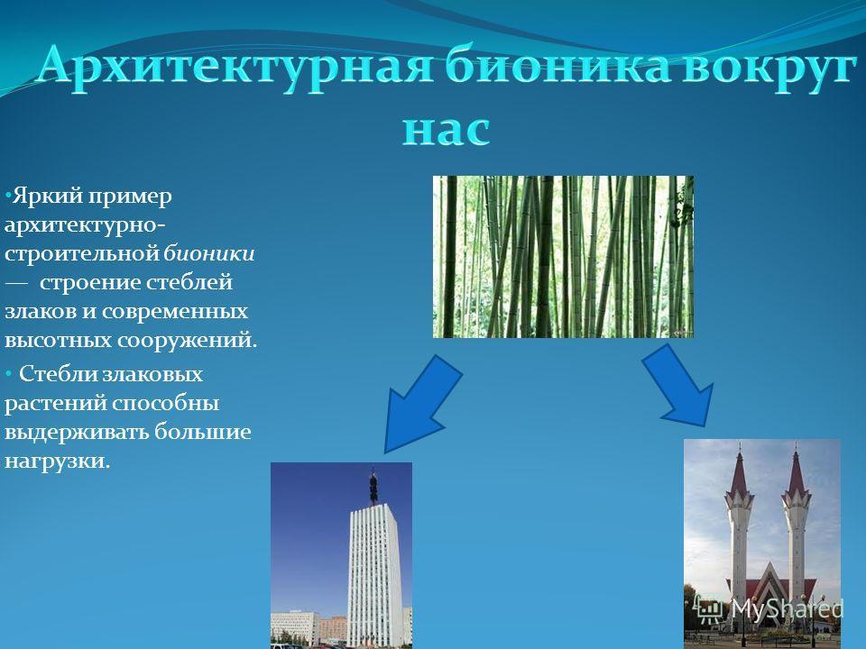 Яркий пример архитектурно- строительной бионики строение стеблей злаков и современных высотных сооружений. Стебли злаковых растений способны выдерживать большие нагрузки.