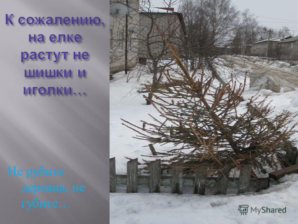 Не рубите деревца, не губите …