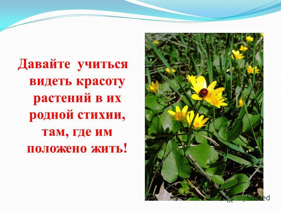 Давайте учиться видеть красоту растений в их родной стихии, там, где им положено жить!