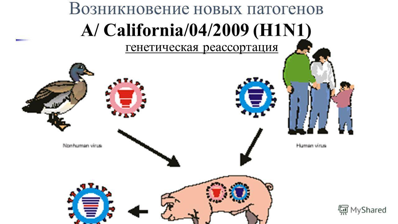 Возникновение новых патогенов А/ California/04/2009 (H1N1) генетическая реассортация