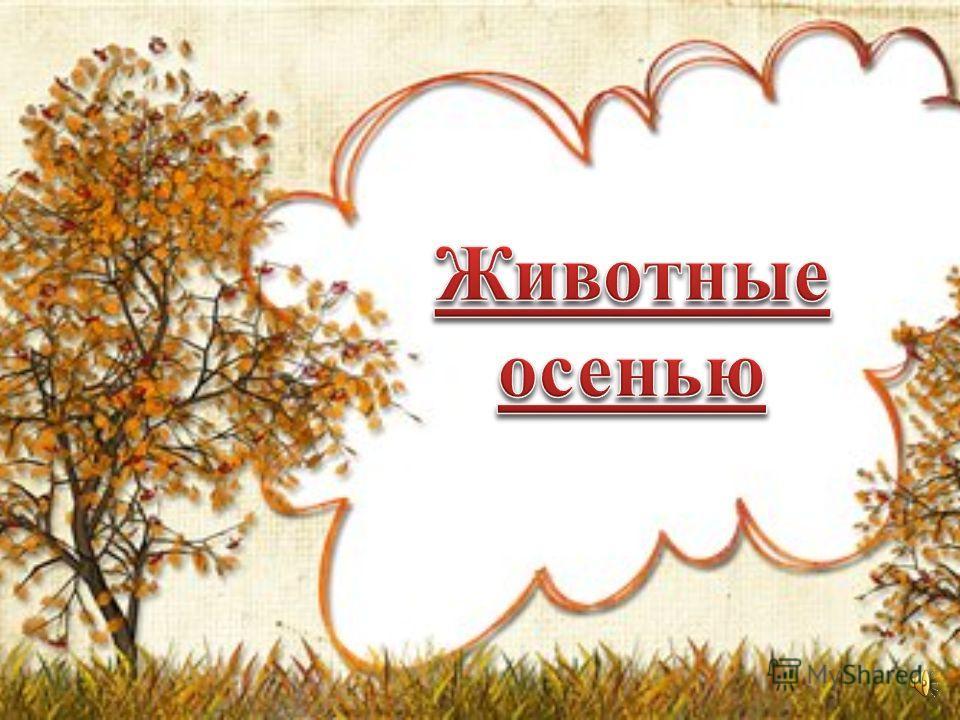 В ноябре дождливо, сыро, Небо тучами закрыто, Лужи, грязь, завяли травы, И тепло уже забыто. В ноябре дождливо, сыро, Небо тучами закрыто, Лужи, грязь, завяли травы, И тепло уже забыто.