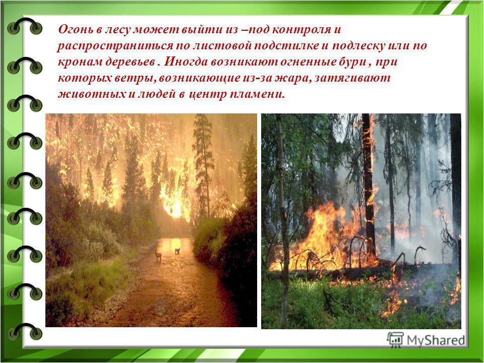 Огонь в лесу может выйти из –под контроля и распространиться по листовой подстилке и подлеску или по кронам деревьев. Иногда возникают огненные бури, при которых ветры, возникающие из-за жара, затягивают животных и людей в центр пламени.
