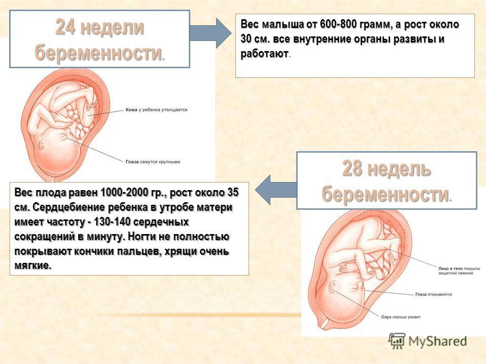 24 недели беременности. Вес малыша от 600-800 грамм, а рост около 30 см. все внутренние органы развиты и работают Вес малыша от 600-800 грамм, а рост около 30 см. все внутренние органы развиты и работают. 28 недель беременности. Вес плода равен 1000-