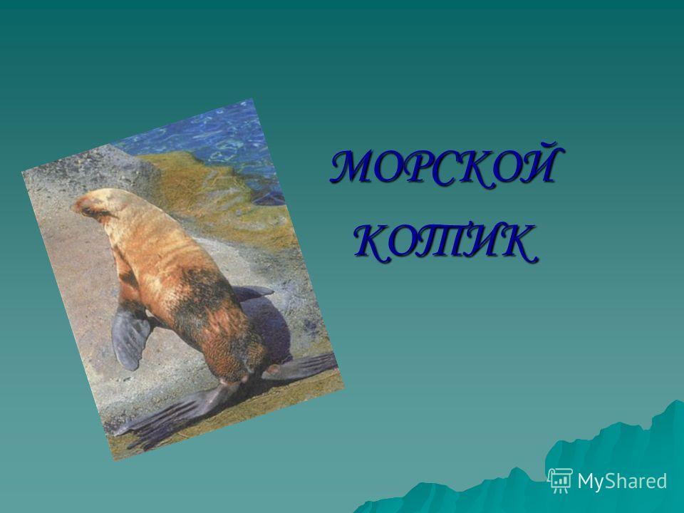 МОРСКОЙКОТИК