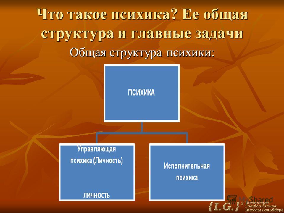 Что такое психика? Ее общая структура и главные задачи Общая структура психики: