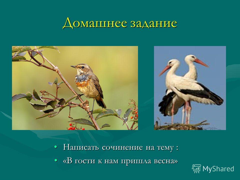 Домашнее задание Написать сочинение на тему : «В гости к нам пришла весна»