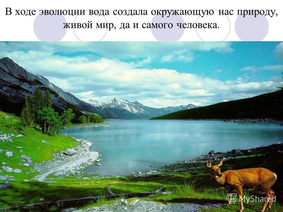 В ходе эволюции вода создала окружающую нас природу, живой мир, да и самого человека.