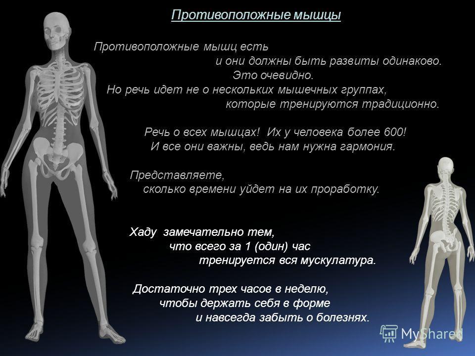 Противоположные мышцы Противоположные мышц есть и они должны быть развиты одинаково. Это очевидно. Но речь идет не о нескольких мышечных группах, которые тренируются традиционно. Речь о всех мышцах! Их у человека более 600! И все они важны, ведь нам
