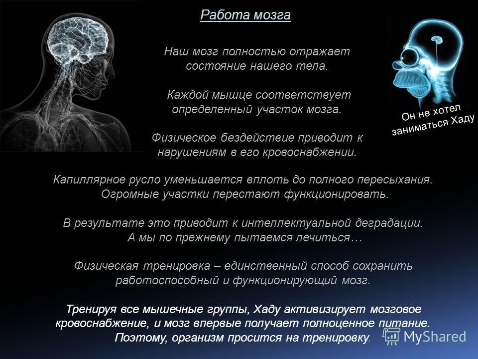 Работа мозга Наш мозг полностью отражает состояние нашего тела. Каждой мышце соответствует определенный участок мозга. Физическое бездействие приводит к нарушениям в его кровоснабжении. Капиллярное русло уменьшается вплоть до полного пересыхания. Огр