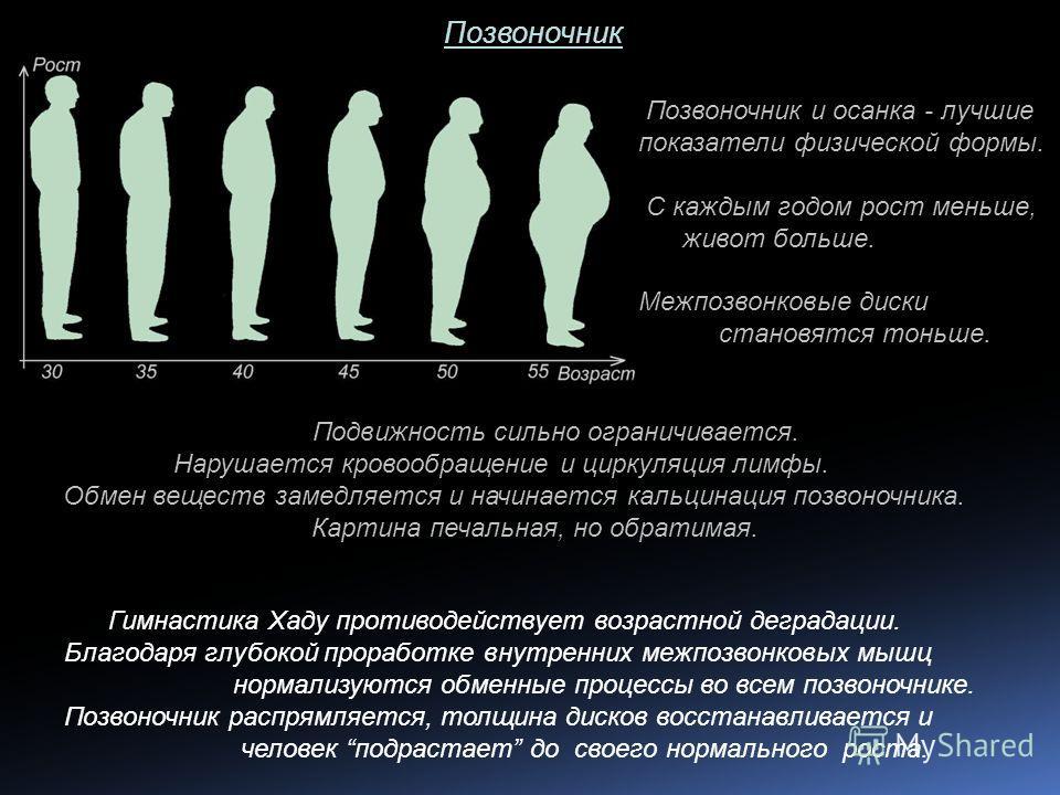 Позвоночник Позвоночник и осанка - лучшие показатели физической формы. С каждым годом рост меньше, живот больше. Межпозвонковые диски становятся тоньше. Подвижность сильно ограничивается. Нарушается кровообращение и циркуляция лимфы. Обмен веществ за