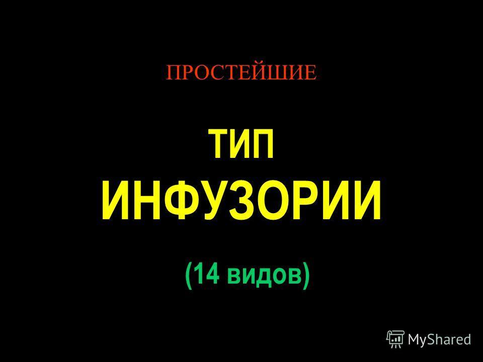 ПРОСТЕЙШИЕ ТИП ИНФУЗОРИИ (14 видов)