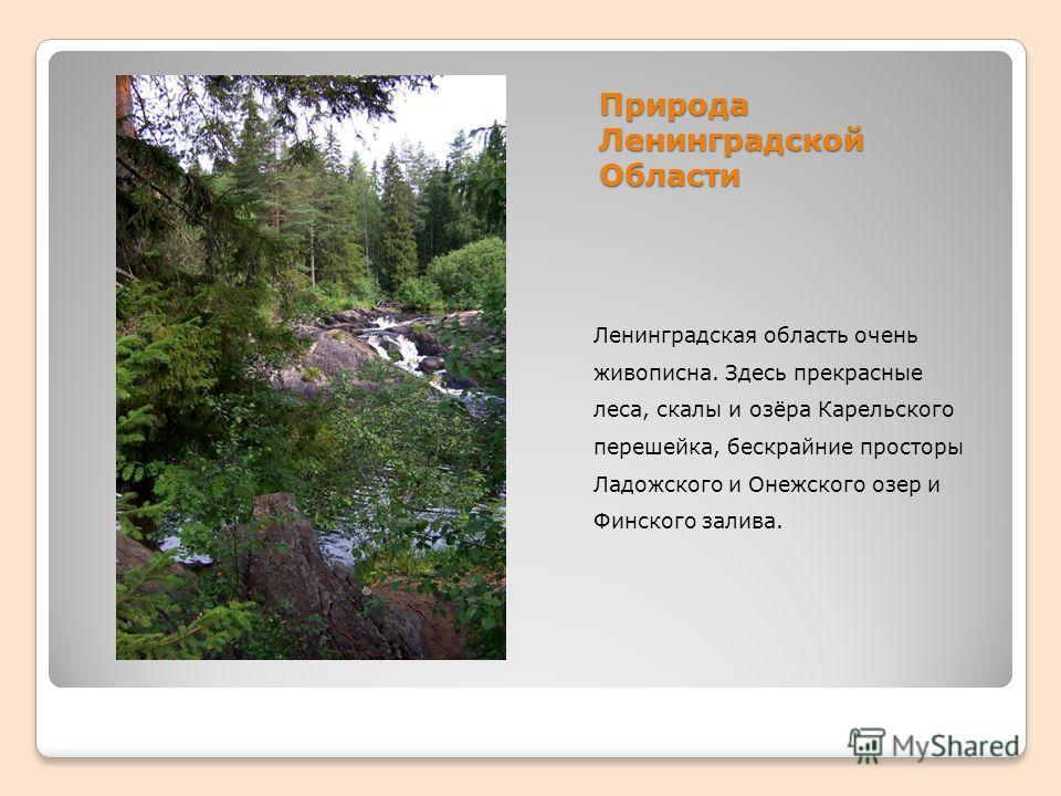 Природа Ленинградской Области Ленинградская область очень живописна. Здесь прекрасные леса, скалы и озёра Карельского перешейка, бескрайние просторы Ладожского и Онежского озер и Финского залива.