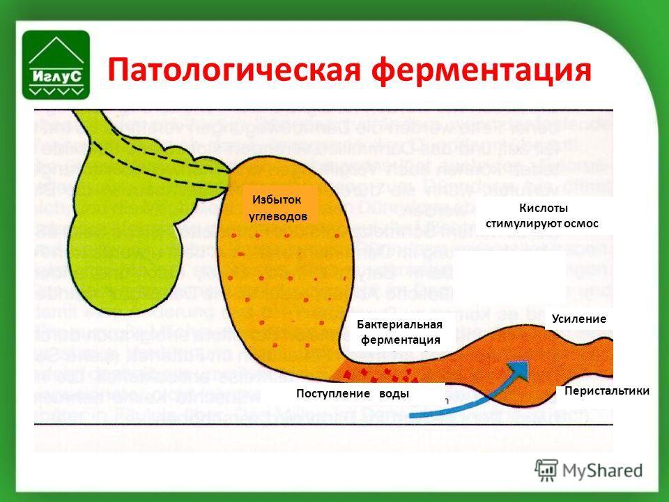 Патологическая ферментация Избыток углеводов Кислоты стимулируют осмос Бактериальная ферментация Поступлениеводы Перистальтики Усиление