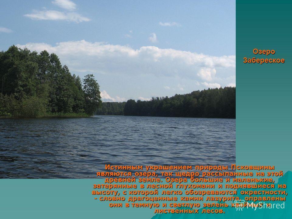 Озеро Забереское Истинным украшением природы Псковщины являются озера, так щедро рассыпанные на этой древней земле. Озера большие и маленькие, затерянные в лесной глухомани и поднявшиеся на высоту, с которой легко обозреваются окрестности, - словно д