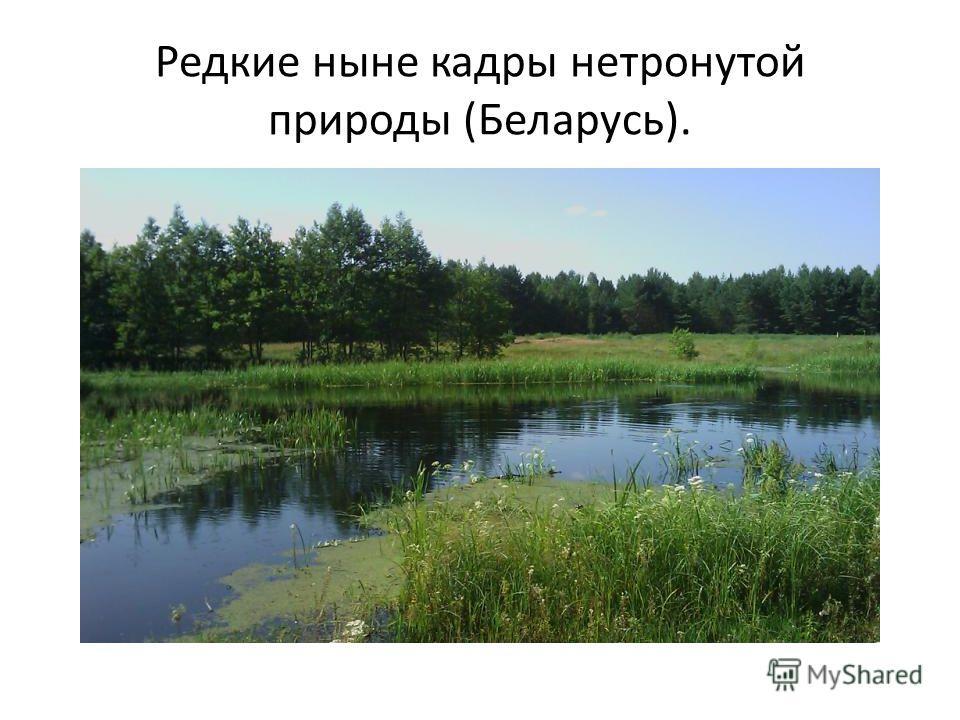 Редкие ныне кадры нетронутой природы (Беларусь).