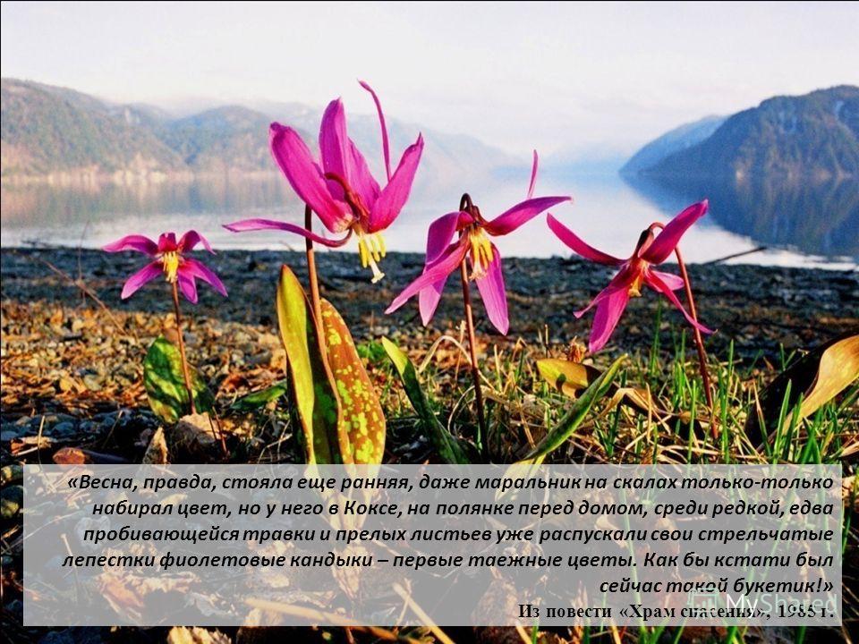 «Весна, правда, стояла еще ранняя, даже маральник на скалах только-только набирал цвет, но у него в Коксе, на полянке перед домом, среди редкой, едва пробивающейся травки и прелых листьев уже распускали свои стрельчатые лепестки фиолетовые кандыки –
