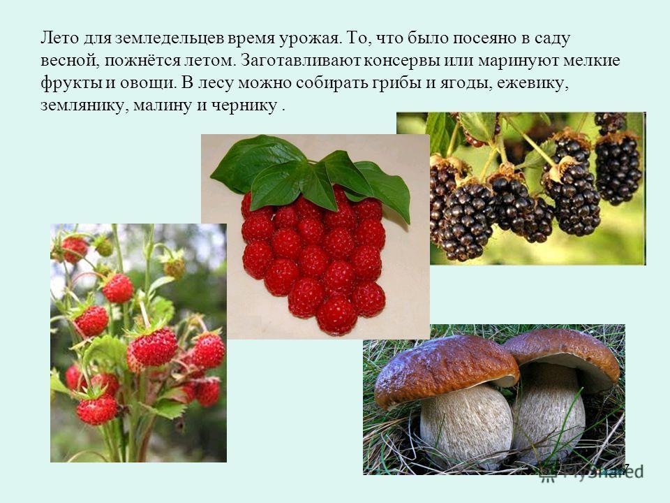 7 Лето для земледельцев время урожая. То, что было посеяно в саду весной, пожнётся летом. Заготавливают консервы или маринуют мелкие фрукты и овощи. В лесу можно собирать грибы и ягоды, ежевику, землянику, малину и чернику.