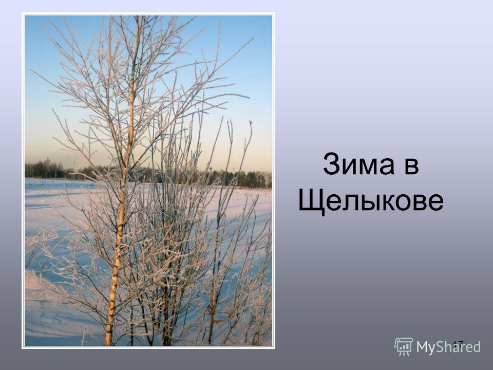 17 Зима в Щелыкове