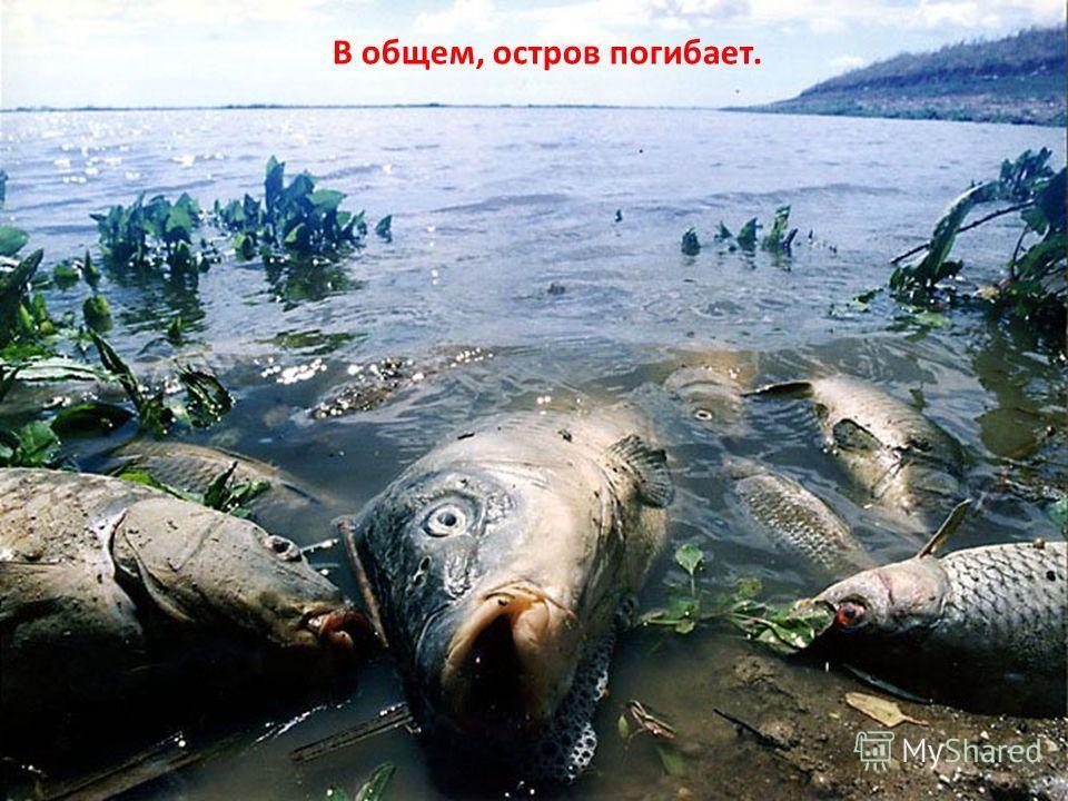 В общем, остров погибает.