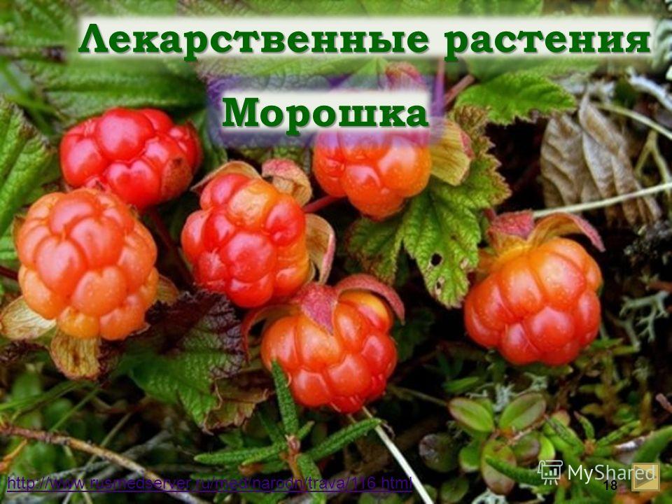 Лекарственные растения Морошка http://www.rusmedserver.ru/med/narodn/trava/116.html 18