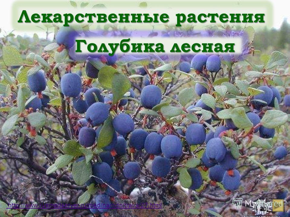 Лекарственные растения Голубика лесная http://www.rusmedserver.ru/med/narodn/trava/27.html 20