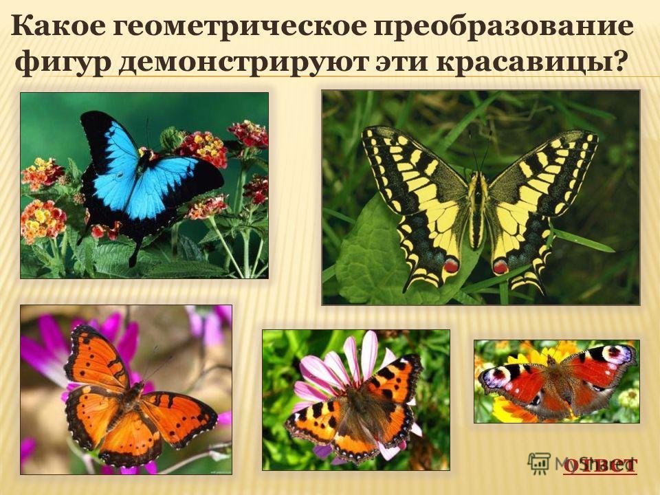 Какое геометрическое преобразование фигур демонстрируют эти красавицы? ответ