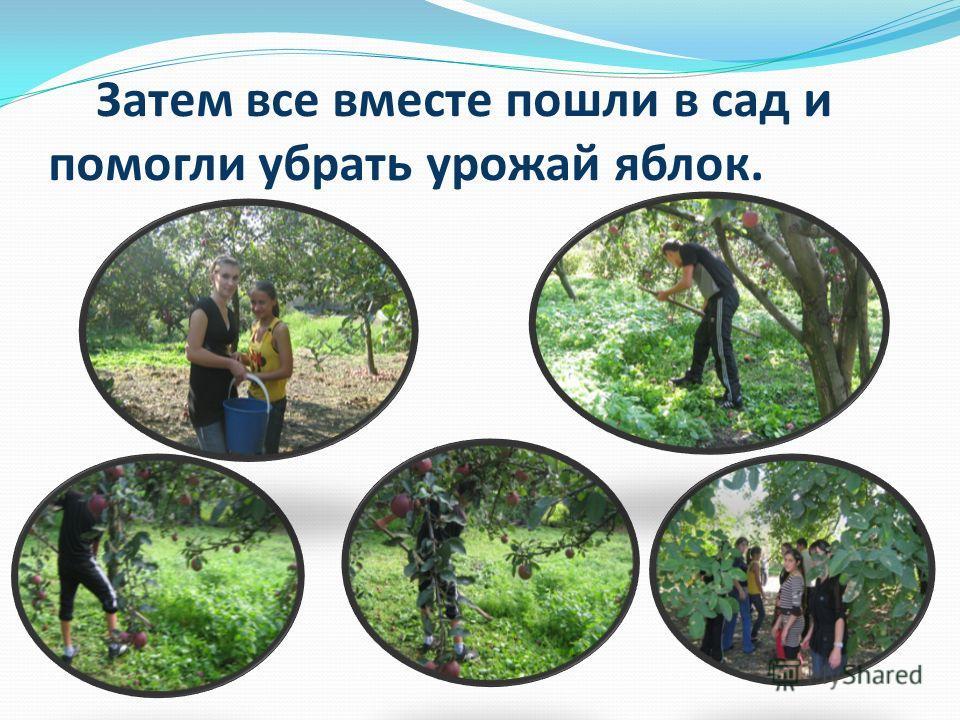 Затем все вместе пошли в сад и помогли убрать урожай яблок.