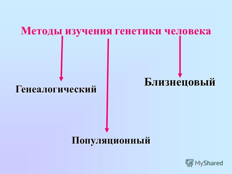 Методы изучения генетики человека Генеалогический Близнецовый Популяционный