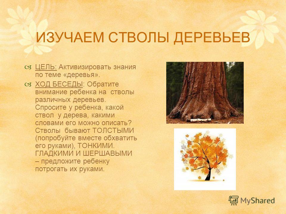 ПОГОВОРИМ О ДЕРЕВЬЯХ ЦЕЛЬ: Активизировать знания по теме «деревья». ПРЕДВАРИТЕЛЬНАЯ РАБОТА: найдите по одному листу клена, дуба, рябины, иголку ели, сосны. ХОД БЕСЕДЫ: Расскажите (и покажите) ребенку о различных частях любого дерева (корни, ствол, ве