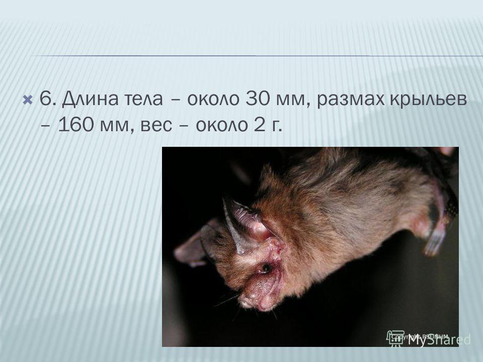 6. Длина тела – около 30 мм, размах крыльев – 160 мм, вес – около 2 г.