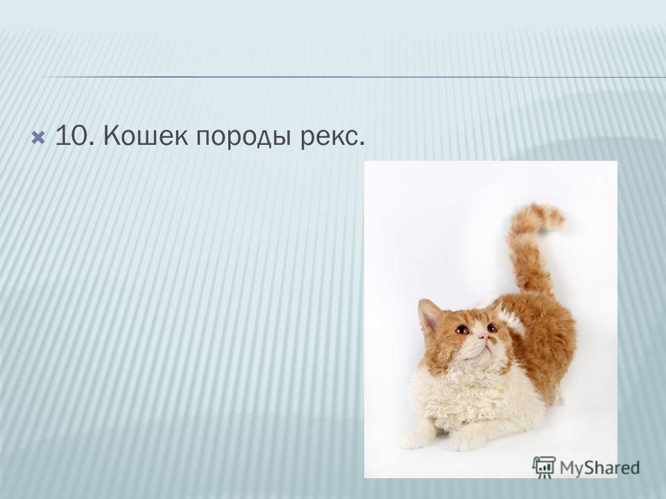 10. Кошек породы рекс.