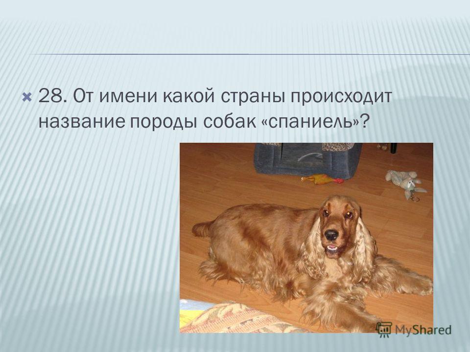 28. От имени какой страны происходит название породы собак «спаниель»?