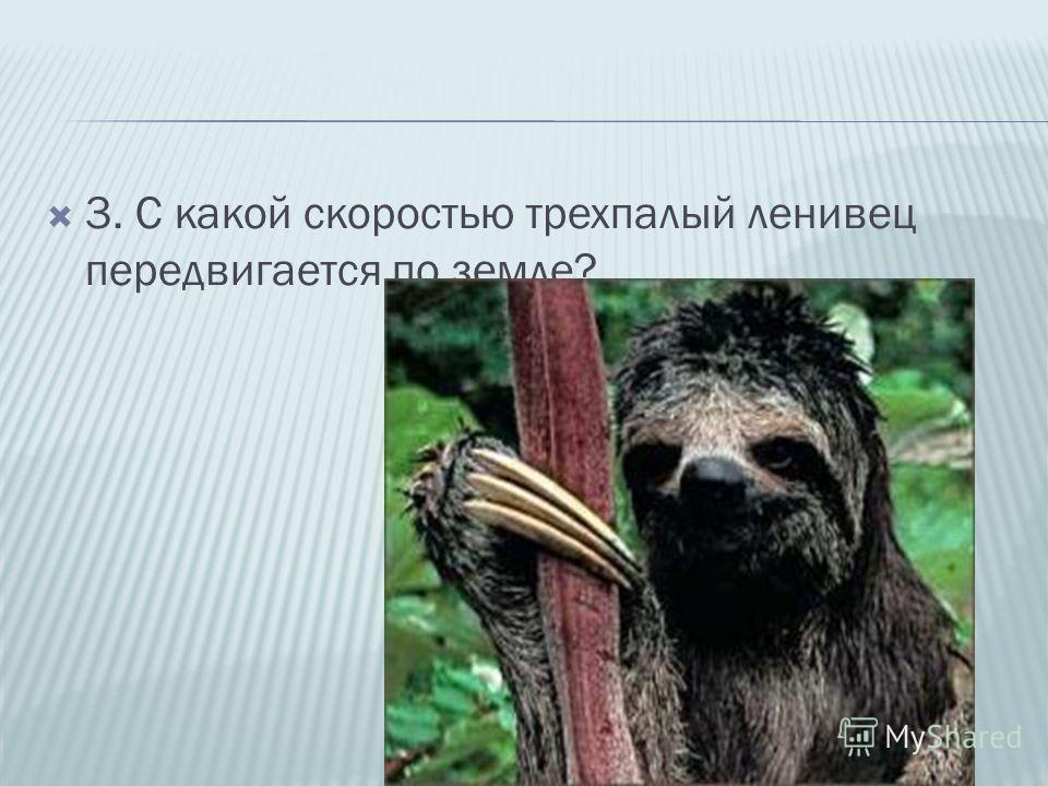 3. С какой скоростью трехпалый ленивец передвигается по земле?