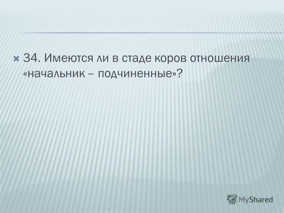34. Имеются ли в стаде коров отношения «начальник – подчиненные»?