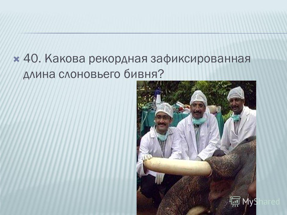 40. Какова рекордная зафиксированная длина слоновьего бивня?