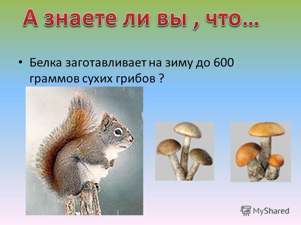 Белка заготавливает на зиму до 600 граммов сухих грибов ?