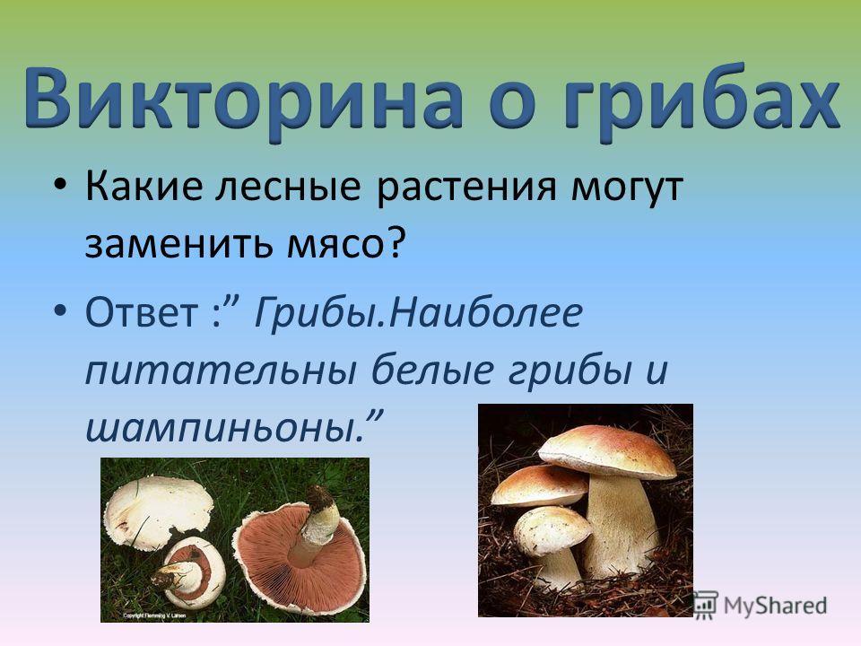 Какие лесные растения могут заменить мясо? Ответ : Грибы.Наиболее питательны белые грибы и шампиньоны.