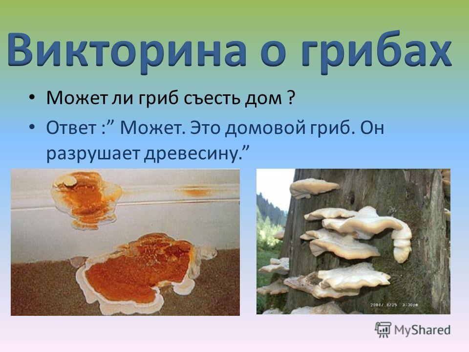 Может ли гриб съесть дом ? Ответ : Может. Это домовой гриб. Он разрушает древесину.